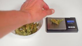 Doctor makes dose of medical cannabis. On scales stock video