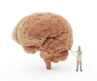 Doctor minúsculo que examina un cerebro ilustración del vector