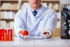 The doctor offering the choice between healthy and vitamins Stock Image