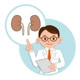 Doctor para una descripción del riñón fotografía de archivo