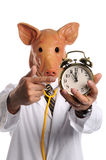 Doctor With Pig Head Pointing at Clock stock photography