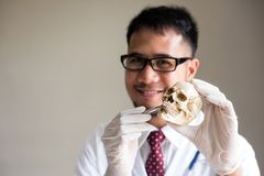 Doctor point at skull teeth, Biology science Stock Photos