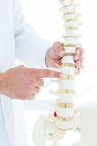 Doctor pointing anatomical spine Royalty Free Stock Photography