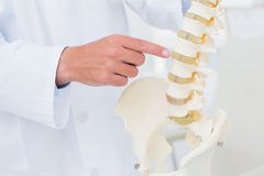 Doctor pointing at anatomical spine Stock Images