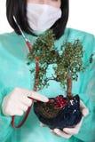 Doctor pruning bonsai tree Royalty Free Stock Photo
