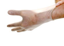 Doctor pulling on surgical glove. Isolated over white royalty free stock photo