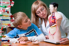 Doctor and schoolboy. With dummy (human body) at anatomy class Royalty Free Stock Images