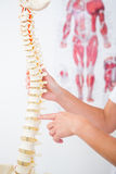 Doctor showing anatomical spine. In clinic royalty free stock photos