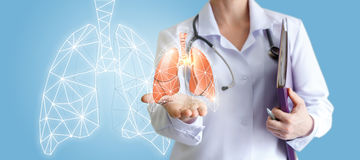 Doctor shows human lungs. stock photography