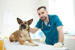 Doctor and sick dog royalty free stock photos