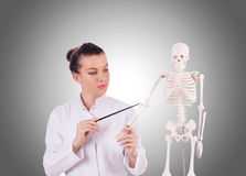 Doctor with skeleton Royalty Free Stock Image