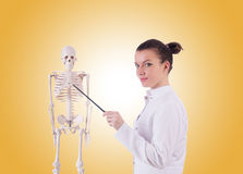 Doctor with skeleton against gradient Stock Photography