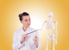Doctor with skeleton against gradient Royalty Free Stock Photography