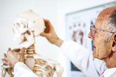 Doctor with skeleton Royalty Free Stock Photography