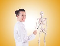 Doctor with skeleton on the white Royalty Free Stock Photo
