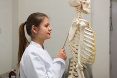 Doctor and skeleton Royalty Free Stock Photography