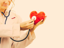 Doctor with stethoscope examining red heart. Medical examination of cardiology. Cardiologist with heart and stethoscope. Female doctor in white uniform makes stock image