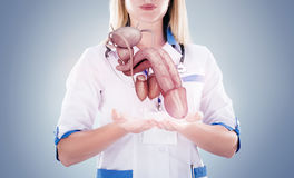 Doctor with stethoscope and penis on the hands in a hospital. Stock Photos