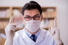 The doctor studying virus bacteria in the lab Royalty Free Stock Images