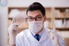 The doctor studying virus bacteria in the lab Stock Photo