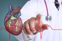 Doctor touch heart beat graph Royalty Free Stock Image