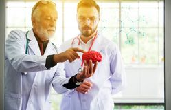 Doctor man working and using skull with plastic brain model together at laboratory royalty free stock image