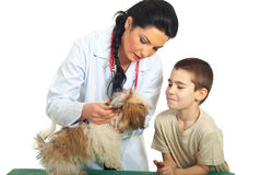 Doctor vet  checking puppy ears. Doctor vet checking puppy ears and the child looking with admiration over white background Stock Image