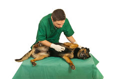 Doctor vet examine dog. With stethoscope on a table in his office Royalty Free Stock Photography