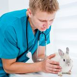 Doctor veterenarii with a rabbit. Doctor veterenarii in the green uniform with a rabbit Stock Photography