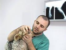 doctor veterinären Royaltyfri Bild
