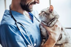 Doctor veterinarian at clinic. Cropped image of handsome male doctor veterinarian with stethoscope is holding cute grey cat on hands at vet clinic and smiling stock photography