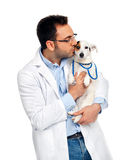 Doctor veterinario con el enchufe Russell imagen de archivo libre de regalías