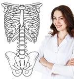 Doctor woman standing near drawing human skeleton Stock Image
