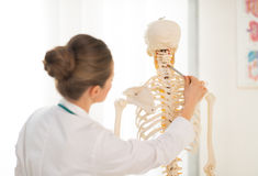 Doctor woman teaching anatomy using human skeleton. Medical doctor woman teaching anatomy using human skeleton model. rear view stock photography