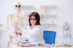 The doctor working in the lab on skeleton. Doctor working in the lab on skeleton Royalty Free Stock Photos