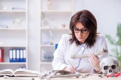 The doctor working in the lab on skeleton. Doctor working in the lab on skeleton Stock Images