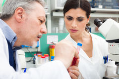 Doctors examining a blood sample Royalty Free Stock Photo