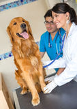 Doctors examining a dog Royalty Free Stock Photography