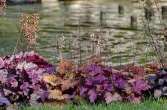 Doctors' Garden small lake in Sofia Stock Photos