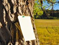 Document in bijlage aan kroon van een boom Stock Foto