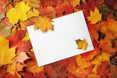 Document, esdoornbladeren stock fotografie