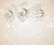 Document met orchidee Royalty-vrije Illustratie