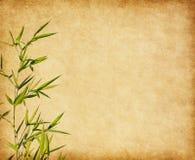 Document met takken van een bamboe Stock Afbeeldingen