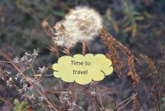 Document wolk met teksttijd te reizen, witte paardebloemen en droog de herfstgras Royalty-vrije Stock Fotografie