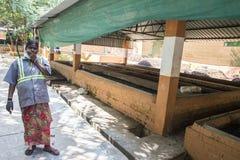 Documentair hoofdartikel PUDUCHERY, PONDICHERY, TAMIL NADU, circa van INDIA - Maart-, 2018 De Indische vrouwen sorteren afval in  stock fotografie