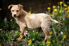 Documentalista del cucciolo in natura Immagini Stock Libere da Diritti