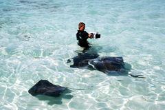 Documentary. A cameraman is doing a documentary on the stingrays in the water of grabd turk island stock images