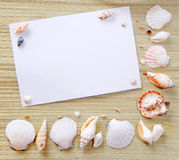 Documento con i seashells Immagini Stock Libere da Diritti