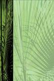 Documento del blocco per grafici della palma Fotografia Stock Libera da Diritti