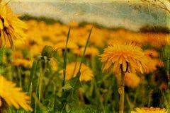 Documento dell'annata con i fiori Fotografie Stock